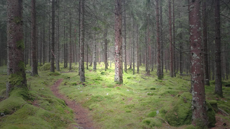 Risveden Terräng